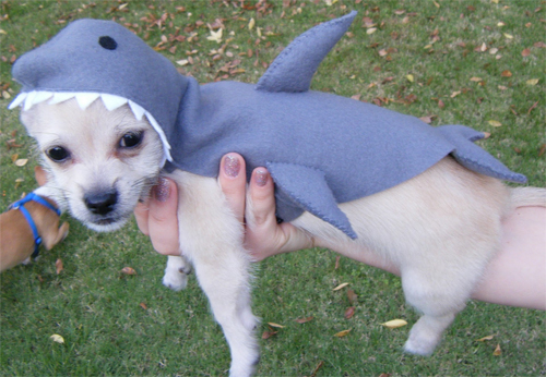 Puppy in a Shark Costume