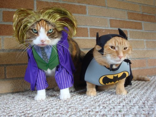 Catman & Joker